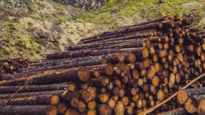 Pandemic Drives Demand for Lumber, Wood Products Manufacturers Expand Capacity