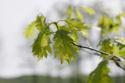 Oak Leaves Photo by Aviana Dimanche on Unsplash