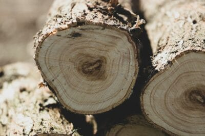 Import/Export Wood Purchasing News 2